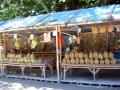 Durian FOR SALE, Iligan City