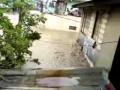 Devastation of Typhoon Milenio in the Philippines
